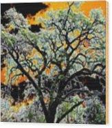 Oak Oasis Wood Print