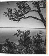 Oak On A Bluff - Black And White Wood Print