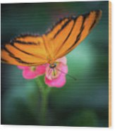 Oak Tiger Butterfly- 2 Wood Print