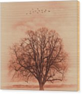 Oak Tree Alone  Wood Print
