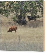 Oak Tree And The Cows Wood Print