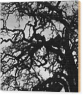 Oak Tree In Winter Detail - Amador County, California Wood Print