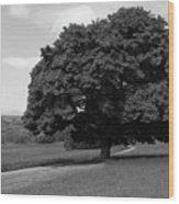 Oak Tree - Killarney National Park Wood Print