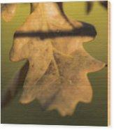 Oak Tree Leaf Wood Print