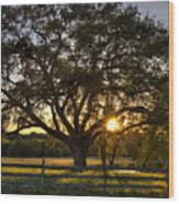 Oak Tree Sunset Wood Print
