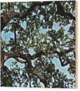 Oak Tree Three Wood Print