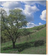 Oak Tree With Clouds Wood Print