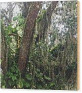 Oak Tree With Spanish Moss Wood Print