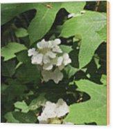 Oakleaf Hydrangea Floral Wood Print