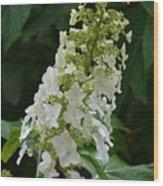 Oakleaf Hydrangea Wood Print