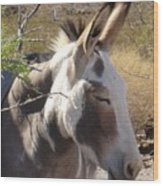 Oatman Burro Wood Print