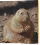 Obese Prairie Dog Sitting In A Pile Of Dirt Wood Print