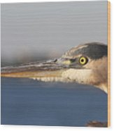 Observant Eye - Heron Portrait Wood Print