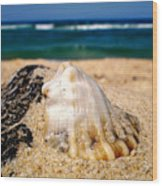 Ocean Beyond A Shell Wood Print