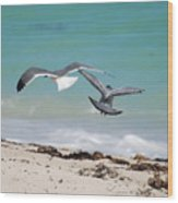 Ocean Birds Wood Print