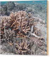 Ocean Fiji Wood Print
