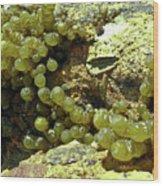 Ocean Seaside Delight Wood Print