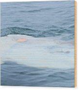 Ocean Sunfish Wood Print