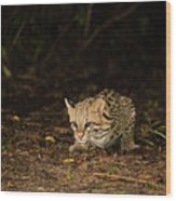 Ocelot Crouching At Night Looking For Food Wood Print