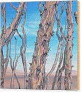 Ocotilla Wood Print