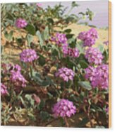 Ocotilla Wells Pink Flowers 2 Wood Print