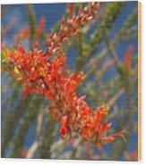 Ocotillo Blossomj Wood Print