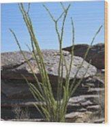 Ocotillo Of Desert Southwest Wood Print