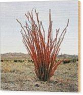 Ocotillo Plant Wood Print