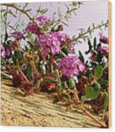 Ocotillo Wilds Wood Print