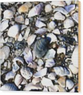 Ocracoke Shells Wood Print