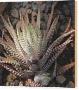 Octo Cacti Wood Print