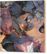 October Acorn Wood Print