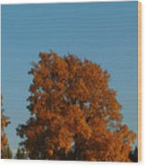 October Day Wood Print