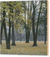 October In Palouse City Park Wood Print