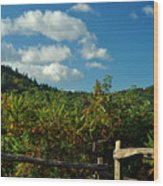 October In The Smokeys Wood Print by William Jones