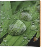 Big Drops Of Rain Wood Print
