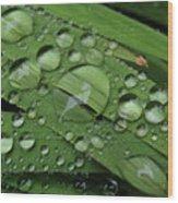 Drops Of Rain Wood Print