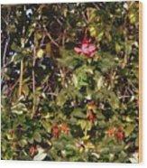 October Rose Wood Print