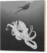 Octopus And Diver - Bw Wood Print