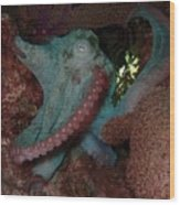 Octopus On Night Dive Wood Print