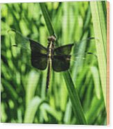 Odanate With Wings Spread Wood Print