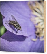 Odd Fly On Clematis Wood Print