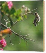 Odd Pose - Hummingbird Wood Print