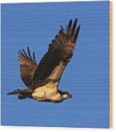 Osprey Flying By Wood Print