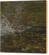 Of Fishes And Rainbows - Wild Salmon Run In The Creek Wood Print