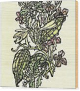 Of Sweet Vanilla Wood Print