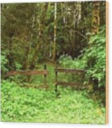 Off The Beaten Path Haida Gwaii Bc Wood Print