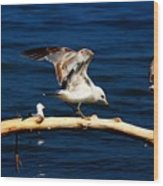 Off You Gull Wood Print