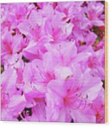 Office Art Azalea Flowers Botanical 31 Azaleas Giclee Art Prints Baslee Troutman Wood Print