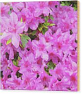 Office Art Azaleas Flower Art Prints 1 Azalea Flowers Giclee Baslee Troutman Wood Print